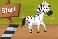 Wyścigowa zebra